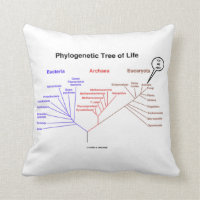 Phylogenetic Tree Of Life You Are Here Throw Pillow