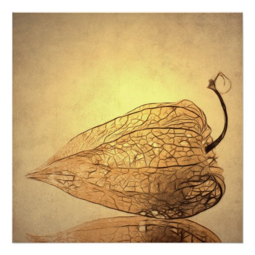 Physalis Posters