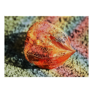 Physalis with rainbow colors posters