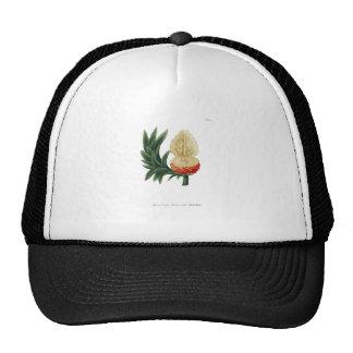 Phytanthoza iconographia N115 Trucker Hat