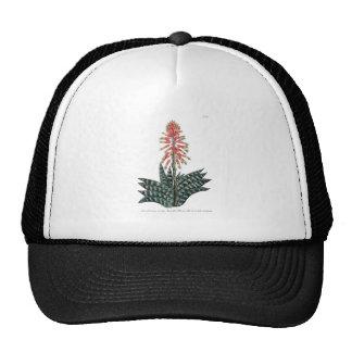 Phytanthoza iconographia N68 Trucker Hat