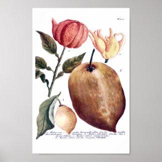 Phytanthoza Iconographia N701 Poster