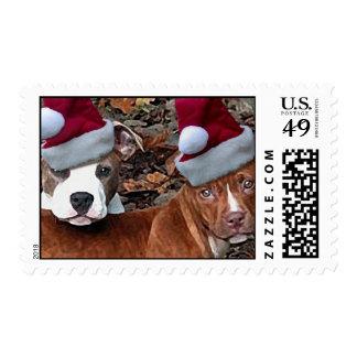 Pi bull Buddies Christmas Postage