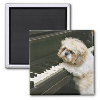 pianista iman de frigorífico