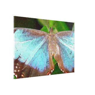 Pic of Butterfly Canvas Print