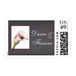 Picasso lily with white and purple postage