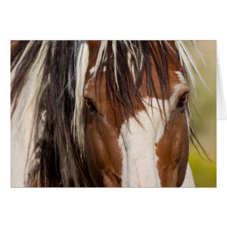 Picasso's Eyes Wild Horse Greeting Card