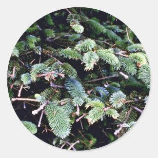 Picea de florecimiento de Sitka Etiqueta Redonda