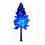 Picea del azul de Colorado Postales