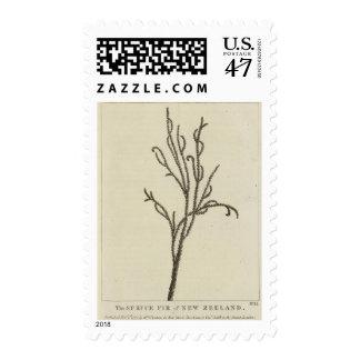 Picea, nueva Zelanda Estampilla