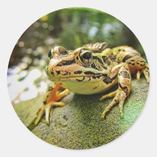 Pickerel Frog by a Pond Classic Round Sticker