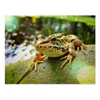 Pickerel Frog by a Pond Postcard