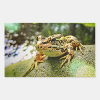 Pickerel Frog by a Pond Rectangular Sticker