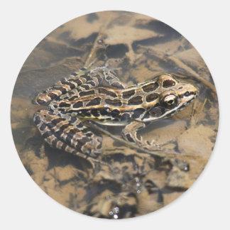 Pickerel Frog Classic Round Sticker