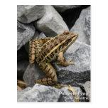 Pickerel Frog Post Card