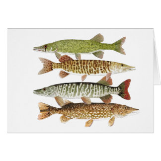 Pickerel,Muskies & Pike Card