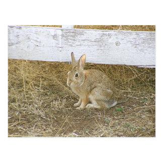 Picket Fence Bunny Postcard
