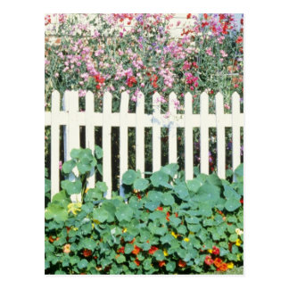 Picket Fence With Sweet Peas And Nasturtium Postcard
