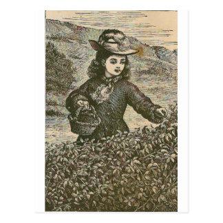 Picking Berries Postcard
