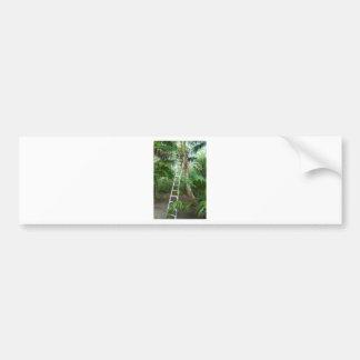 Picking fresh coconuts bumper sticker