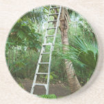 Picking fresh coconuts drink coasters