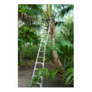 Picking fresh coconuts postcard
