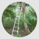 Picking fresh coconuts sticker