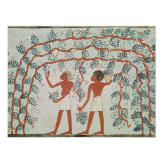 Picking grapes, from the Tomb of Nakht Poster