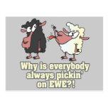 picking on EWE black sheep humor Postcard