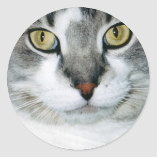 Pickle the Cat Stickers