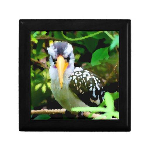 pico amarillo blanco negro del pájaro contra el ve cajas de regalo