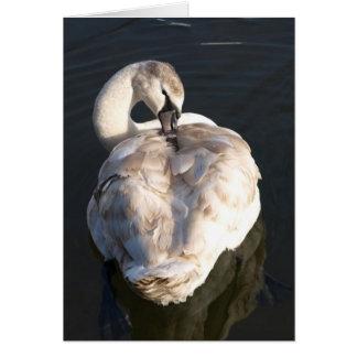 Picor - cisne tarjeta de felicitación