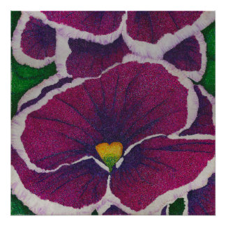 Picottee Pansy Poster