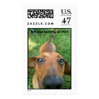 Pics_230.jpg, Are you looking at me? Postage