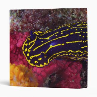 """Picta real de Nudibranch Felimare de la diosa del Carpeta 1"""""""