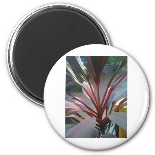 Picture 1243.jpg magnets