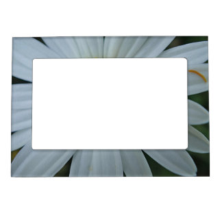 Picture frame large white daisy bloom