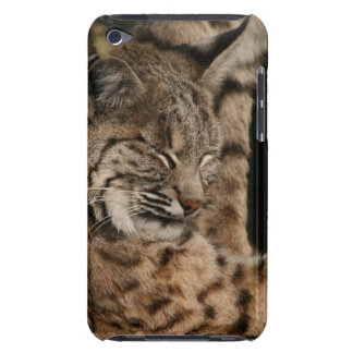 Picture of a Bobcat iTouch Case iPod Touch Case