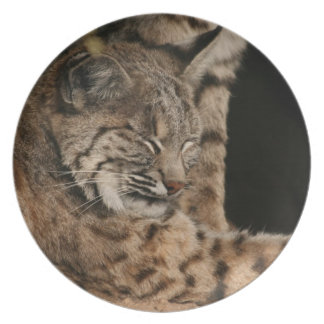 Picture of a Bobcat Plate