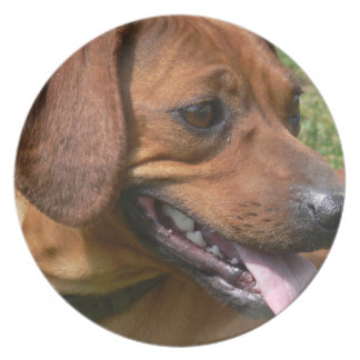 Picture of a Dachshund Dog Plate