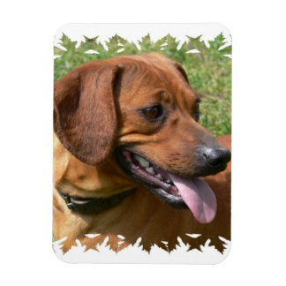 Picture of a Dachshund Dog Premium Magnet Flexible Magnets