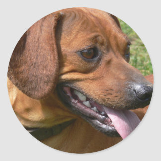 Picture of a Dachshund Dog Stickers