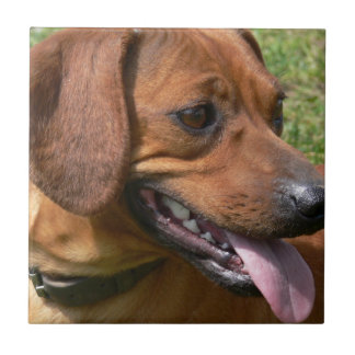 Picture of a Dachshund Dog Tile