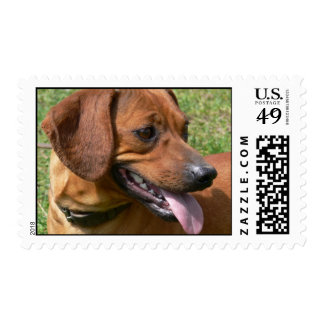 Picture of a Daschund Postage Stamp