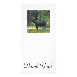 Picture of A Fine Moose In Profile Card