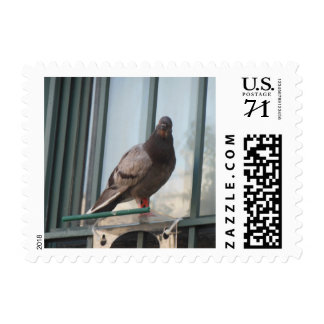 Picture of a Pigeon Postage