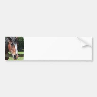 Picture of a Quarter Horse Bumper Sticker Car Bumper Sticker