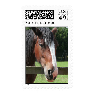 Picture of a Quarter Horse Postage Stamp