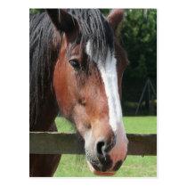 Picture of a Quarter Horse Postcard