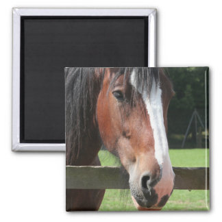 Picture of a Quarter Horse Square Magnet Magnets